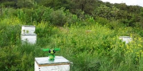 apicultura-1