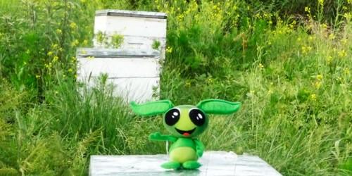apicultura-4