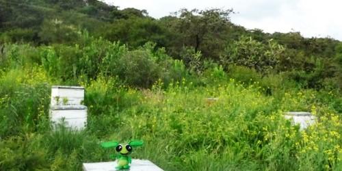 apicultura-5
